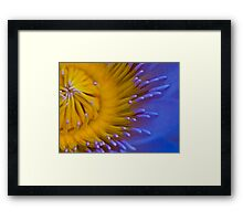 Up Close and Very Personal - Water Lily - Cairns Botanical Gardens - Queensland - Australia Framed Print