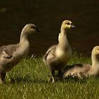 Goslings by Olga Zvereva