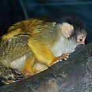 Squirrel Monkey 2 by ys-eye