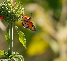 Butterfly Kisses by Susan van Zyl