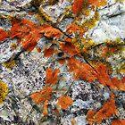"""'Beach Lichens"""" by debsphotos"""