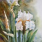 Bearded Iris by Debbie Schiff