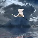 Egret Flying Color by George Lenz