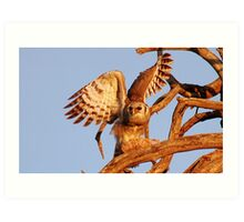 THE GIANT EAGLE OWL - and the weavers nest Art Print