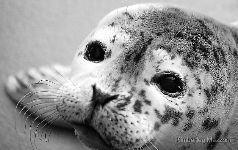 """Baby Harbor Seal"" by Kimberley Mazzoni 
