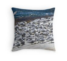 Greater Crested Terns Throw Pillow
