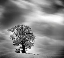 Glass Tree by Gavin King