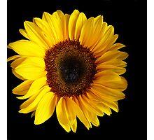 Sunflower....Helianthus annuus Photographic Print