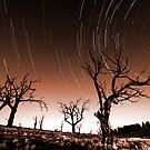 Star Trails Tint by Annette Blattman
