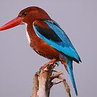 WHITE-THROATED KINGFISHER by Marieseyes