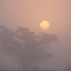 Foggy Sunrise in Wachapreague by elasita
