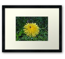 Flower, or just another weed? Framed Print