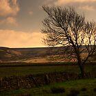 Moorland by frank Yule