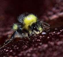Brand New Bumble Bee by Rachel Lilly