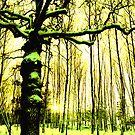 Gula skogen (Yellow forest) by distortion