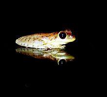 My Little Froggie by Virginia N. Fred