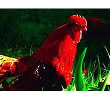 ~Rockie Red~ Photographic Print