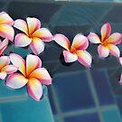 Floating Frangipanis by Helen Phillips