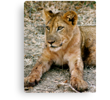 Cub Canvas Print