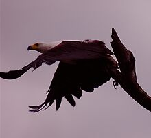 TAKE OFF by DUNCAN DAVIE