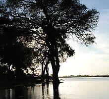 Dusk, Chobe National Park, Botswana, Africa by Adrian Paul