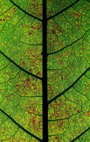 Green highway's road leaves by Etienne RUGGERI Artwork eRAW