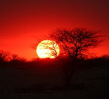 Etosha sunset by ChrisCoombes