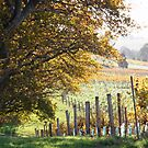 Autumn, Tamar Valley Wine Route - Tasmania by Ruth Durose