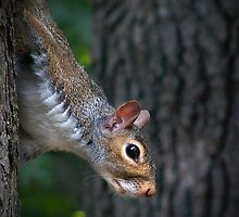 """Gray Squirrel Profile"" by Melinda Stewart Page"