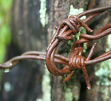 Barbed Wire by Harry Hoover