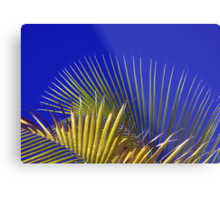 Palm and Sky Metal Print