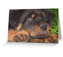 56 Days Young - Rottweiler Portrait Greeting Card