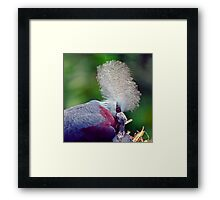 Common Crowned Pigeon and chick Framed Print