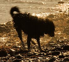 Shaggy Dog by Rob Lodge