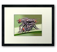 Mating Flies (1) ! Framed Print