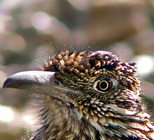 ROAD RUNNER HEAD CLOSE UP by davesc