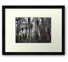 Pandani in the afternoon Framed Print
