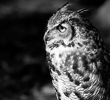 Great Horned Owl by Karen Kaleta