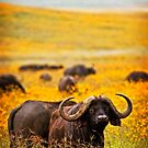 Cape Buffalo in Yellow by Scott Ward