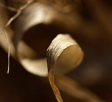 Curl by J. Scott Coile