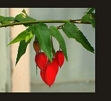 RED DANGLING DOODLES by artist4peace