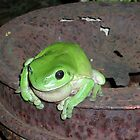 Green Tree Frog by Corrie Wharton