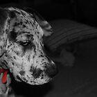 Daisy by Ben Breen