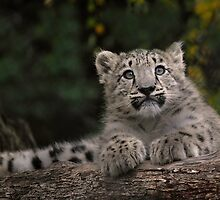 Australia's Zoos by DanielTMiller
