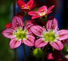 Little Pink Blossoms by Deborah  Benoit
