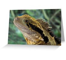 Eastern Water Dragon, Physignathus lesueurii Greeting Card