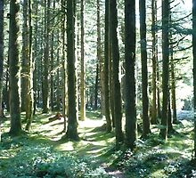 GOLDEN EARS CAMP GROUND by DIANEPEAREN