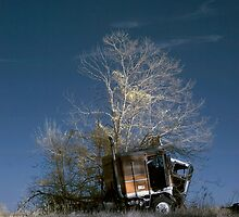 Truck & Tree by James Davidson