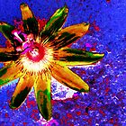 Ornamental Passion by grarbaleg