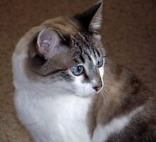 A Fancee Cat by Sunflwrconcepts